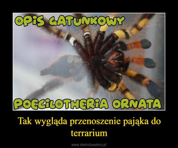 Tak wygląda przenoszenie pająka do terrarium –