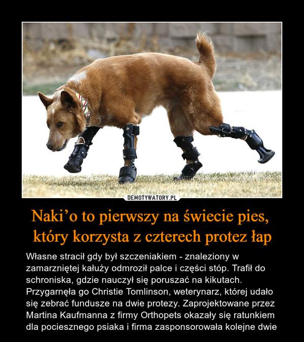 Naki'o to pierwszy na świecie pies, który korzysta z czterech protez łap – Własne stracił gdy był szczeniakiem - znaleziony w zamarzniętej kałuży odmroził palce i części stóp. Trafił do schroniska, gdzie nauczył się poruszać na kikutach. Przygarnęła go Christie Tomlinson, weterynarz, której udało się zebrać fundusze na dwie protezy. Zaprojektowane przez Martina Kaufmanna z firmy Orthopets okazały się ratunkiem dla pociesznego psiaka i firma zasponsorowała kolejne dwie