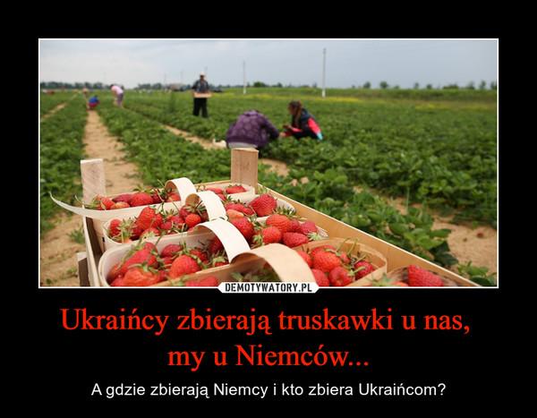 Ukraińcy zbierają truskawki u nas, my u Niemców... – A gdzie zbierają Niemcy i kto zbiera Ukraińcom?