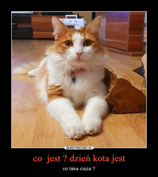 co  jest ? dzień kota jest – co taka cisza ?