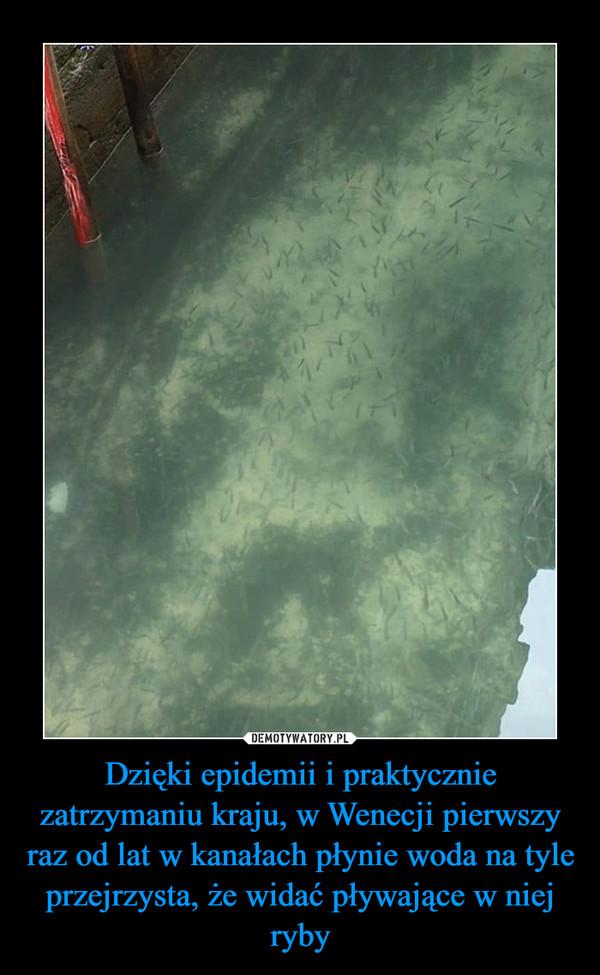 Dzięki epidemii i praktycznie zatrzymaniu kraju, w Wenecji pierwszy raz od lat w kanałach płynie woda na tyle przejrzysta, że widać pływające w niej ryby –