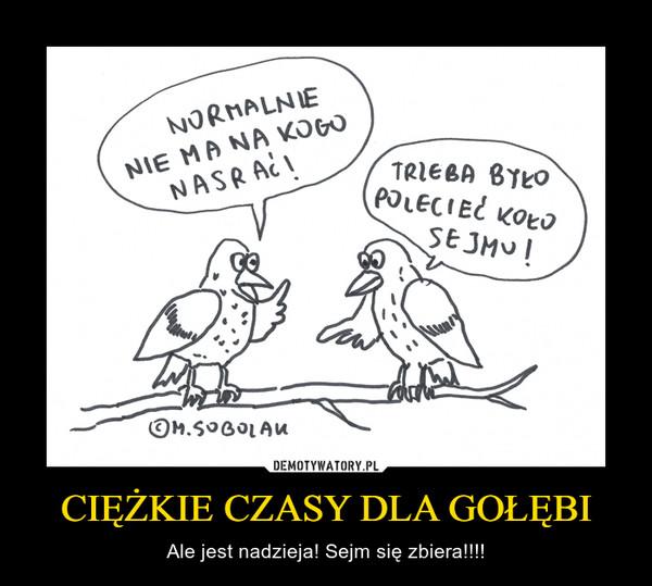 CIĘŻKIE CZASY DLA GOŁĘBI – Ale jest nadzieja! Sejm się zbiera!!!!