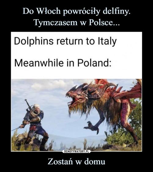 Do Włoch powróciły delfiny. Tymczasem w Polsce... Zostań w domu