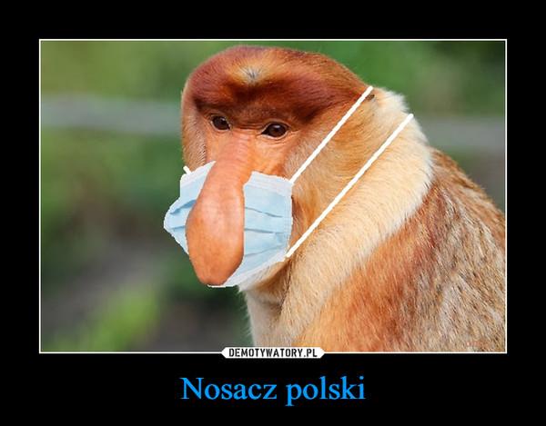 Nosacz polski –