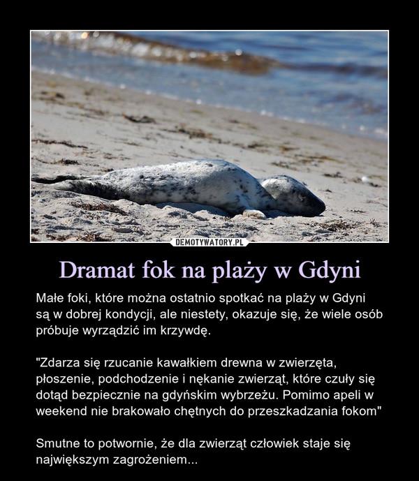 """Dramat fok na plaży w Gdyni – Małe foki, które można ostatnio spotkać na plaży w Gdyni są w dobrej kondycji, ale niestety, okazuje się, że wiele osób próbuje wyrządzić im krzywdę.""""Zdarza się rzucanie kawałkiem drewna w zwierzęta, płoszenie, podchodzenie i nękanie zwierząt, które czuły się dotąd bezpiecznie na gdyńskim wybrzeżu. Pomimo apeli w weekend nie brakowało chętnych do przeszkadzania fokom""""Smutne to potwornie, że dla zwierząt człowiek staje się największym zagrożeniem... Małe foki, które można ostatnio spotkać na plaży w Gdyni są w dobrej kondycji, ale niestety, okazuje się, że wiele osób próbuje wyrządzić im krzywdę.""""Zdarza się rzucanie kawałkiem drewna w zwierzęta, płoszenie, podchodzenie i nękanie zwierząt, które czuły się dotąd bezpiecznie na gdyńskim wybrzeżu. Pomimo apeli w weekend nie brakowało chętnych do przeszkadzania fokom""""Smutne to potwornie, że dla zwierząt człowiek staje się największym zagrożeniem..."""