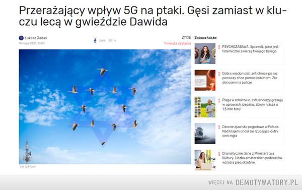 Przerażający wpływ 5G na ptaki. Gęsi zamiast w kluczu lecą w gwieździe Dawida – http://raboninco.com/dNJm