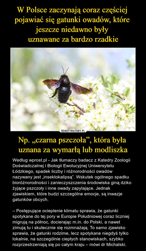 """W Polsce zaczynają coraz częściej  pojawiać się gatunki owadów, które  jeszcze niedawno były  uznawane za bardzo rzadkie Np. """"czarna pszczoła"""", która była  uznana za wymarłą lub modliszka"""