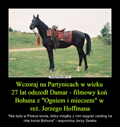 """Wczoraj na Partynicach w wieku  27 lat odszedł Damar - filmowy koń  Bohuna z """"Ogniem i mieczem"""" w  reż. Jerzego Hoffmana"""