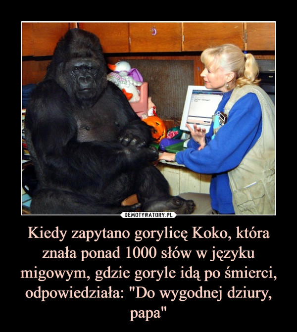 """Kiedy zapytano gorylicę Koko, która znała ponad 1000 słów w języku migowym, gdzie goryle idą po śmierci, odpowiedziała: """"Do wygodnej dziury, papa"""" –"""