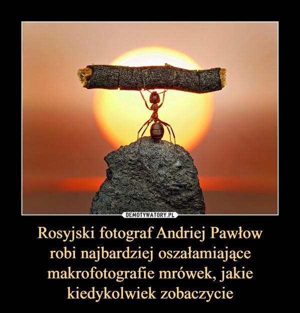 Rosyjski fotograf Andriej Pawłowrobi najbardziej oszałamiające makrofotografie mrówek, jakie kiedykolwiek zobaczycie –