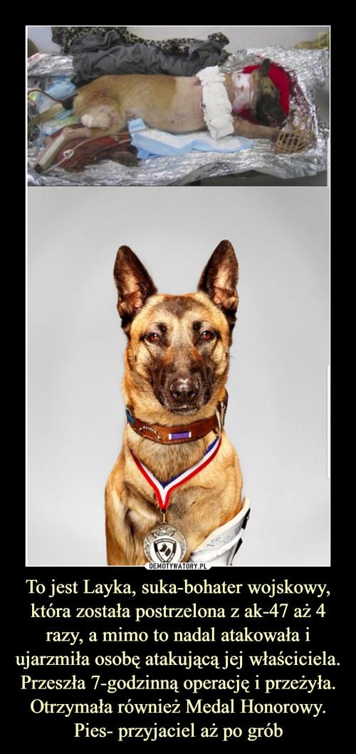 To jest Layka, suka-bohater wojskowy, która została postrzelona z ak-47 aż 4 razy, a mimo to nadal atakowała i ujarzmiła osobę atakującą jej właściciela. Przeszła 7-godzinną operację i przeżyła. Otrzymała również Medal Honorowy. Pies- przyjaciel aż po grób