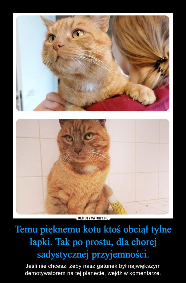 Temu pięknemu kotu ktoś obciął tylne łapki. Tak po prostu, dla chorej sadystycznej przyjemności. – Jeśli nie chcesz, żeby nasz gatunek był największym demotywatorem na tej planecie, wejdź w komentarze.