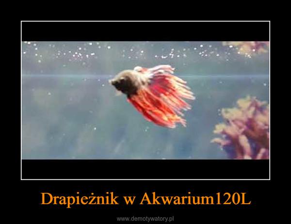 Drapieżnik w Akwarium120L –