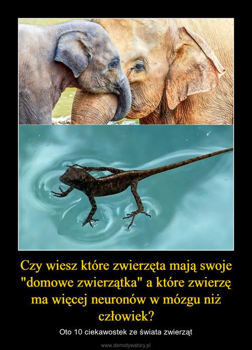 """Czy wiesz które zwierzęta mają swoje """"domowe zwierzątka"""" a które zwierzę ma więcej neuronów w mózgu niż człowiek?"""