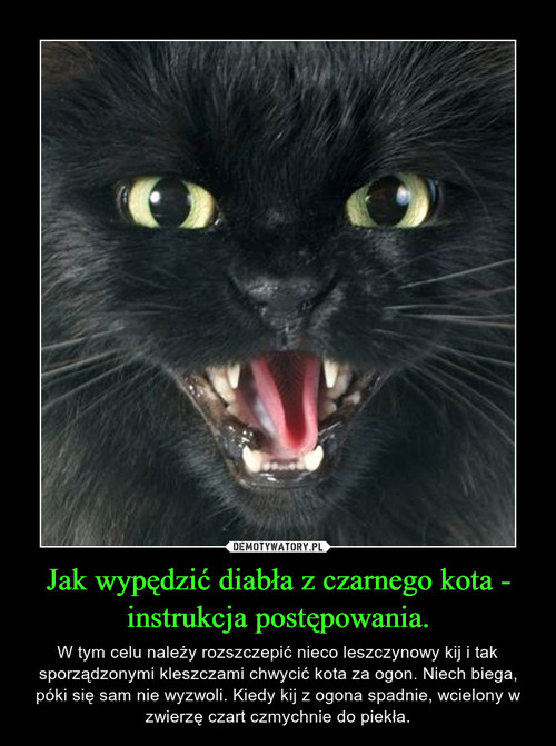 Jak wypędzić diabła z czarnego kota - instrukcja postępowania.