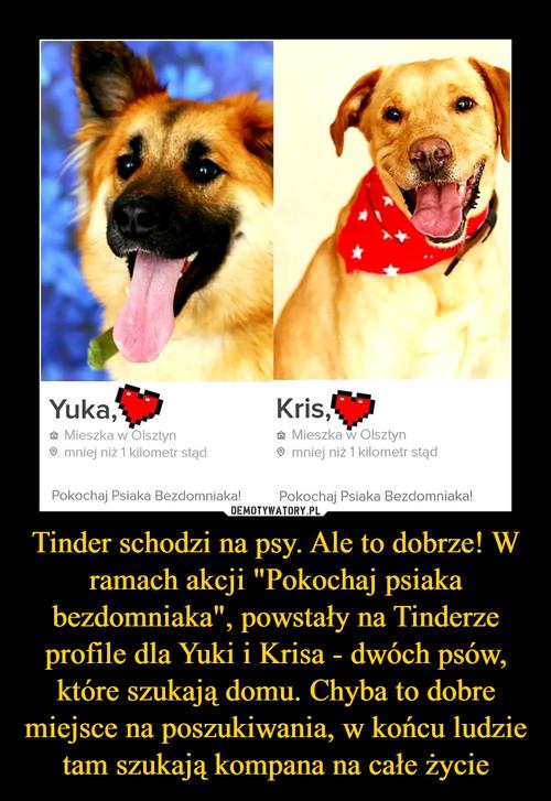"""Tinder schodzi na psy. Ale to dobrze! W ramach akcji """"Pokochaj psiaka bezdomniaka"""", powstały na Tinderze profile dla Yuki i Krisa - dwóch psów, które szukają domu. Chyba to dobre miejsce na poszukiwania, w końcu ludzie tam szukają kompana na całe życie"""