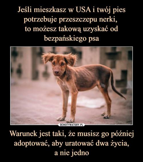 Jeśli mieszkasz w USA i twój pies potrzebuje przeszczepu nerki,  to możesz takową uzyskać od bezpańskiego psa Warunek jest taki, że musisz go później adoptować, aby uratować dwa życia, a nie jedno