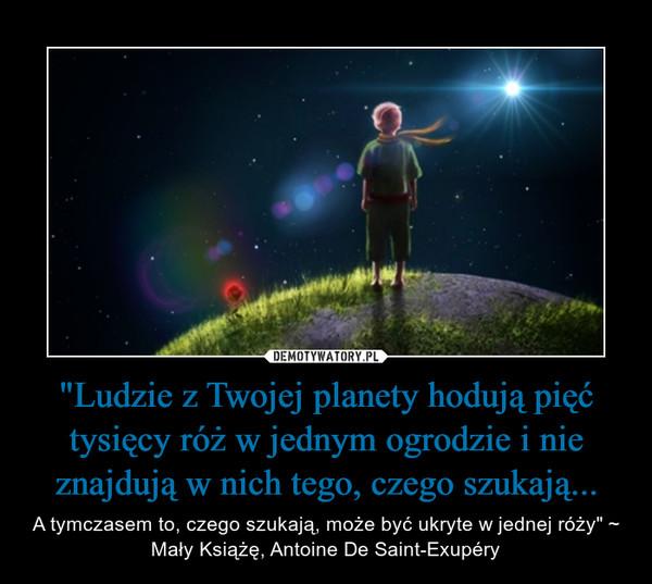 """""""Ludzie z Twojej planety hodują pięć tysięcy róż w jednym ogrodzie i nie znajdują w nich tego, czego szukają... – A tymczasem to, czego szukają, może być ukryte w jednej róży"""" ~ Mały Książę, Antoine De Saint-Exupéry"""