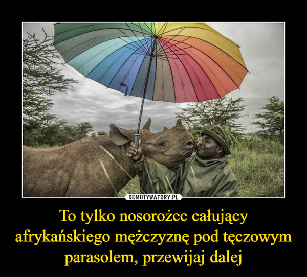 To tylko nosorożec całujący afrykańskiego mężczyznę pod tęczowym parasolem, przewijaj dalej –