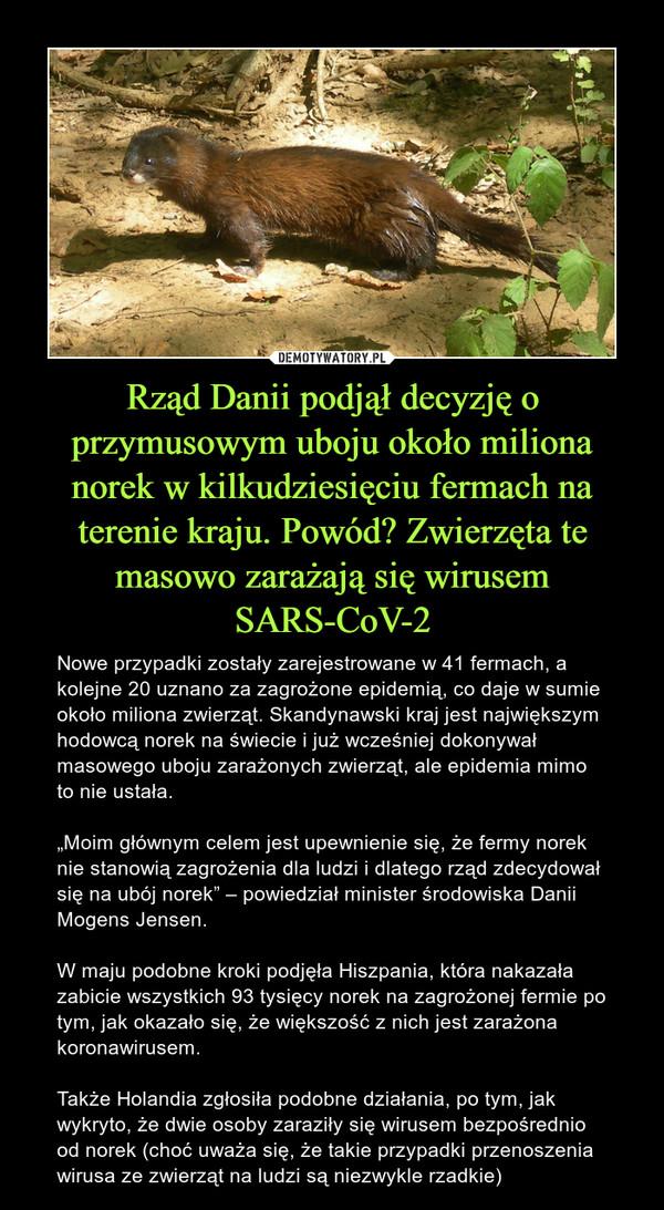 """Rząd Danii podjął decyzję o przymusowym uboju około miliona norek w kilkudziesięciu fermach na terenie kraju. Powód? Zwierzęta te masowo zarażają się wirusem SARS-CoV-2 – Nowe przypadki zostały zarejestrowane w 41 fermach, a kolejne 20 uznano za zagrożone epidemią, co daje w sumie około miliona zwierząt. Skandynawski kraj jest największym hodowcą norek na świecie i już wcześniej dokonywał masowego uboju zarażonych zwierząt, ale epidemia mimo to nie ustała.""""Moim głównym celem jest upewnienie się, że fermy norek nie stanowią zagrożenia dla ludzi i dlatego rząd zdecydował się na ubój norek"""" – powiedział minister środowiska Danii Mogens Jensen.W maju podobne kroki podjęła Hiszpania, która nakazała zabicie wszystkich 93 tysięcy norek na zagrożonej fermie po tym, jak okazało się, że większość z nich jest zarażona koronawirusem.Także Holandia zgłosiła podobne działania, po tym, jak wykryto, że dwie osoby zaraziły się wirusem bezpośrednio od norek (choć uważa się, że takie przypadki przenoszenia wirusa ze zwierząt na ludzi są niezwykle rzadkie)"""