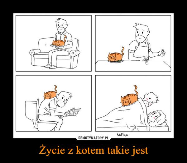 Życie z kotem takie jest –