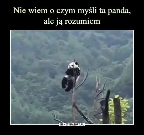 Nie wiem o czym myśli ta panda, ale ją rozumiem