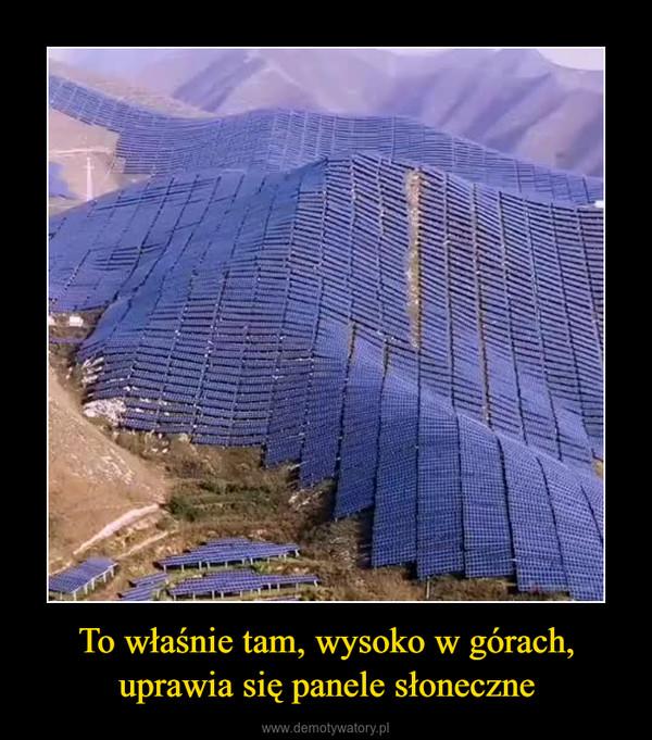 To właśnie tam, wysoko w górach, uprawia się panele słoneczne –