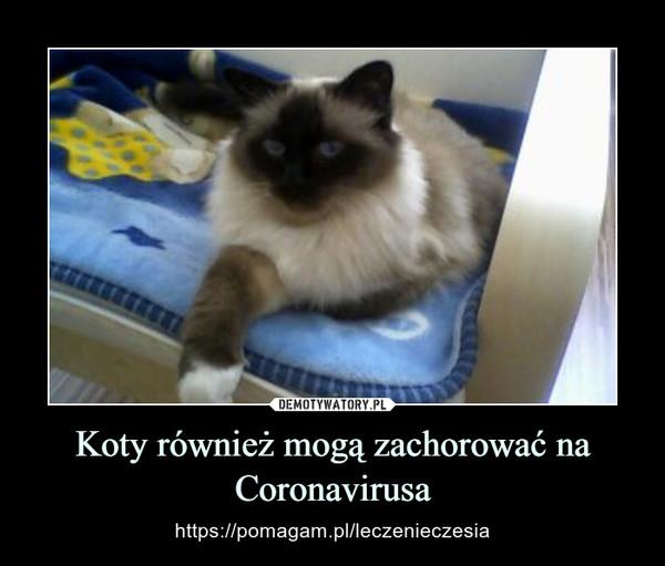 Koty również mogą zachorować na Coronavirusa – https://pomagam.pl/leczenieczesia