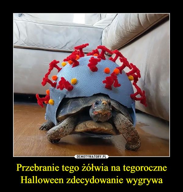 Przebranie tego żółwia na tegoroczne Halloween zdecydowanie wygrywa –