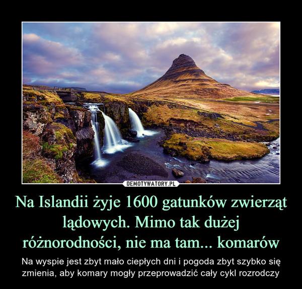 Na Islandii żyje 1600 gatunków zwierząt lądowych. Mimo tak dużej różnorodności, nie ma tam... komarów – Na wyspie jest zbyt mało ciepłych dni i pogoda zbyt szybko się zmienia, aby komary mogły przeprowadzić cały cykl rozrodczy