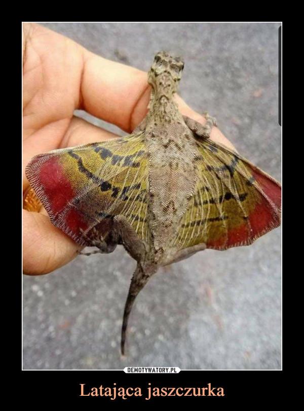 Latająca jaszczurka –
