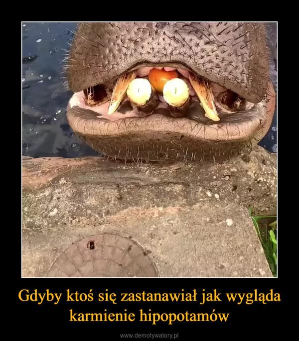 Gdyby ktoś się zastanawiał jak wygląda karmienie hipopotamów –