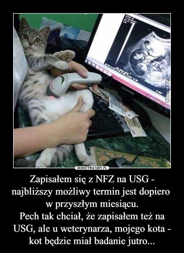 Zapisałem się z NFZ na USG - najbliższy możliwy termin jest dopiero w przyszłym miesiącu.Pech tak chciał, że zapisałem też na USG, ale u weterynarza, mojego kota - kot będzie miał badanie jutro... –