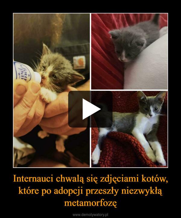 Internauci chwalą się zdjęciami kotów, które po adopcji przeszły niezwykłą metamorfozę –