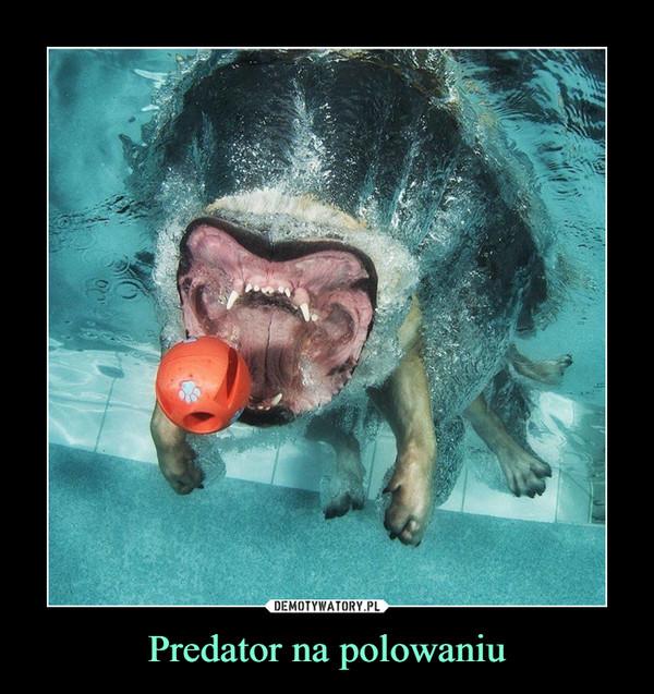 Predator na polowaniu –