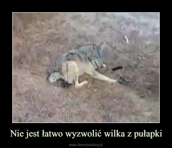 Nie jest łatwo wyzwolić wilka z pułapki –