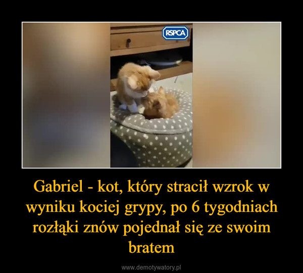 Gabriel - kot, który stracił wzrok w wyniku kociej grypy, po 6 tygodniach rozłąki znów pojednał się ze swoim bratem –