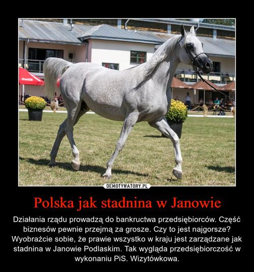Polska jak stadnina w Janowie