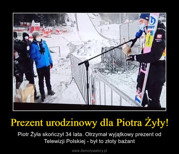 Prezent urodzinowy dla Piotra Żyły! – Piotr Żyła skończył 34 lata. Otrzymał wyjątkowy prezent od Telewizji Polskiej - był to złoty bażant