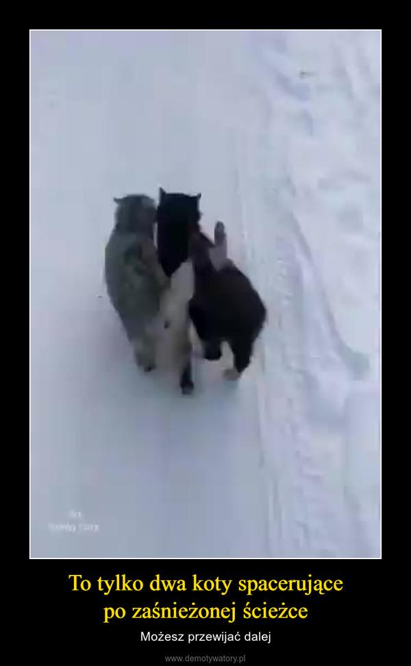 To tylko dwa koty spacerującepo zaśnieżonej ścieżce – Możesz przewijać dalej