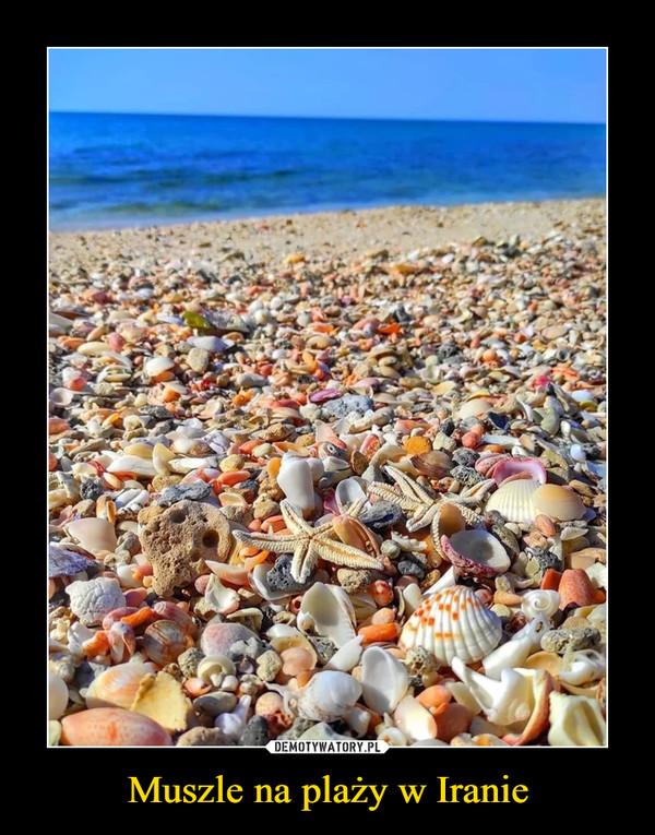 Muszle na plaży w Iranie –