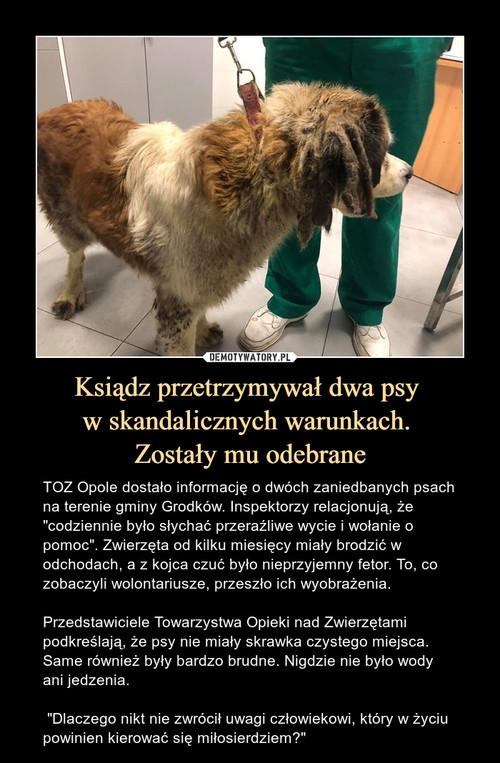 Ksiądz przetrzymywał dwa psy  w skandalicznych warunkach.  Zostały mu odebrane