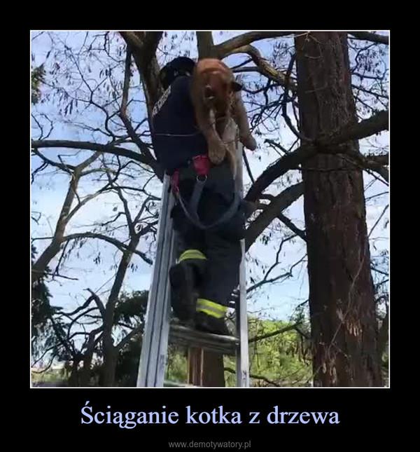 Ściąganie kotka z drzewa –