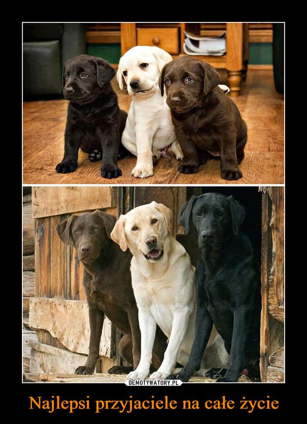 Najlepsi przyjaciele na całe życie –