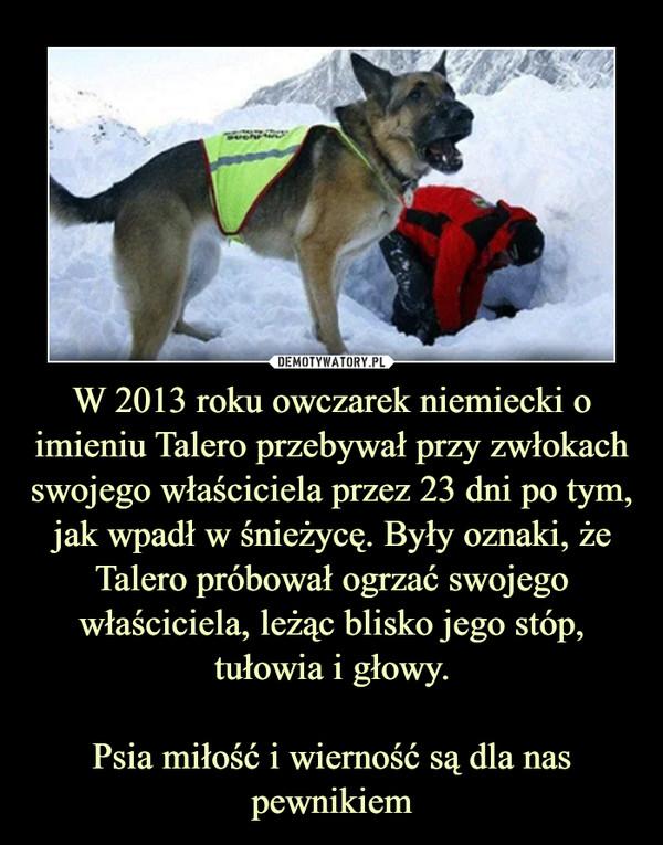 W 2013 roku owczarek niemiecki o imieniu Talero przebywał przy zwłokach swojego właściciela przez 23 dni po tym, jak wpadł w śnieżycę. Były oznaki, że Talero próbował ogrzać swojego właściciela, leżąc blisko jego stóp, tułowia i głowy.Psia miłość i wierność są dla nas pewnikiem –