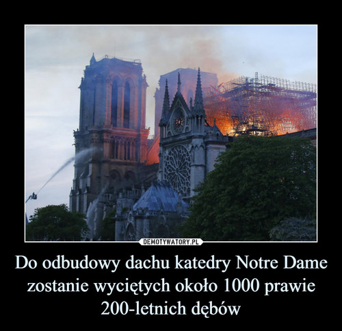Do odbudowy dachu katedry Notre Dame zostanie wyciętych około 1000 prawie 200-letnich dębów