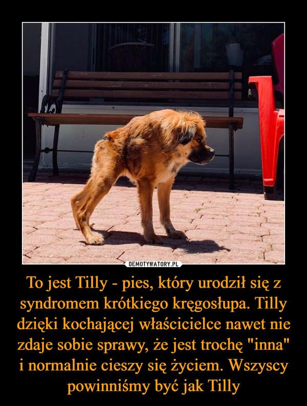 """To jest Tilly - pies, który urodził się z syndromem krótkiego kręgosłupa. Tilly dzięki kochającej właścicielce nawet nie zdaje sobie sprawy, że jest trochę """"inna"""" i normalnie cieszy się życiem. Wszyscy powinniśmy być jak Tilly –"""
