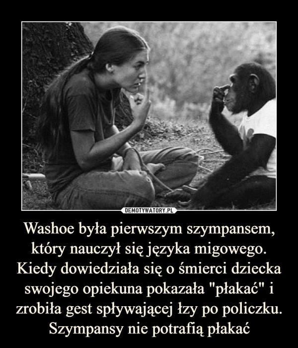 """Washoe była pierwszym szympansem, który nauczył się języka migowego. Kiedy dowiedziała się o śmierci dziecka swojego opiekuna pokazała """"płakać"""" i zrobiła gest spływającej łzy po policzku. Szympansy nie potrafią płakać –"""