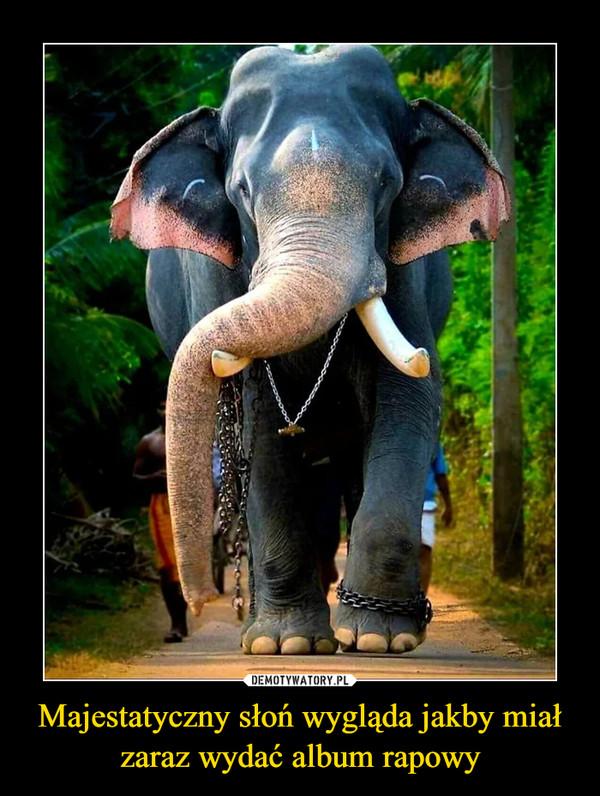 Majestatyczny słoń wygląda jakby miał zaraz wydać album rapowy –