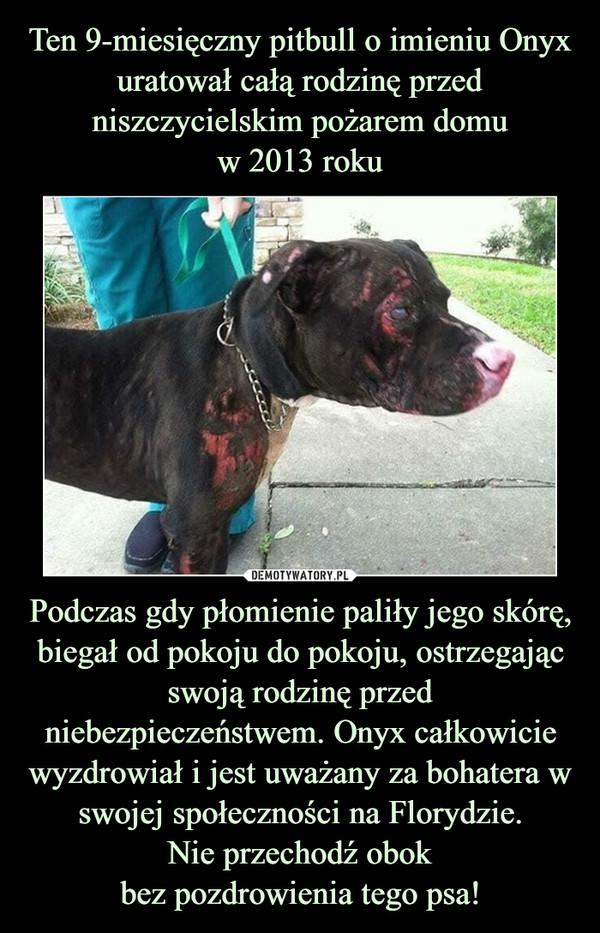 Podczas gdy płomienie paliły jego skórę, biegał od pokoju do pokoju, ostrzegającswoją rodzinę przed niebezpieczeństwem. Onyx całkowicie wyzdrowiał i jest uważany za bohatera w swojej społeczności na Florydzie.Nie przechodź obokbez pozdrowienia tego psa! –